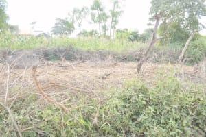 The Water Project: Mbitini Community B -  Animal Pen
