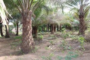The Water Project: Kamasondo, Bross 2 -  Palm Kernel Farm