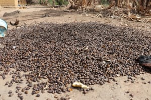 The Water Project: Kamasondo, Bross 2 -  Palm Kernel