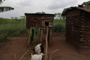 The Water Project: Bulima-Kahembe Community -  Chicken Coop