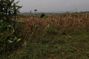 The Water Project: Bulima-Kahembe Community -  Farm