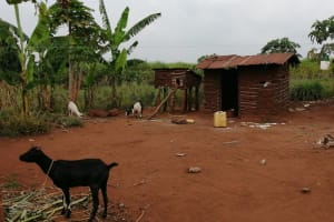 The Water Project: Bulima-Kahembe Community -  Goat In The Compound