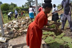 The Water Project: Isanjiro Community, Musambai Spring -  Grass Planting