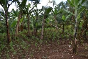The Water Project: Bumira Community, Savai Spring -  Farm
