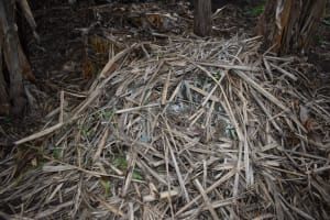 The Water Project: Bumira Community, Savai Spring -  Compost Pile