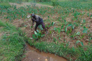 The Water Project: Shihome Community, Oloo Njinuli Spring -  Initial Site Clearance