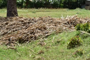 The Water Project: Emuyere Community, Kaikai Spring -  Animal Feed
