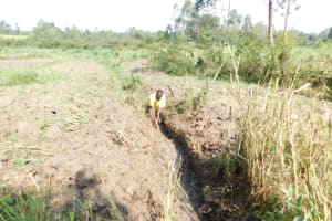 The Water Project: Mwitwa Community, Matiang'i Spring -  Clearing Drainage Channel