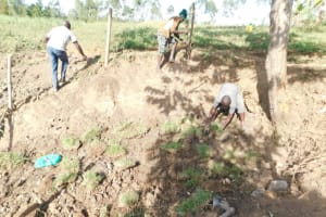The Water Project: Mwitwa Community, Matiang'i Spring -  Planting Grass And Fencing
