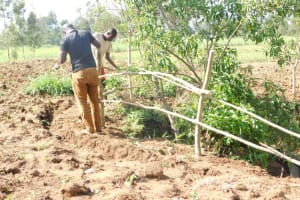 The Water Project: Khaunga A Community, Murutu Spring -  Setting Up Protective Fence
