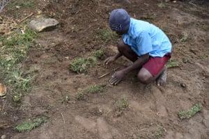 The Water Project: Bukhakunga Community, Maikuva Spring -  Grass Planting