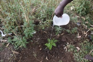 The Water Project: Makale Community, Kwalukhayiro Spring -  Tree Planting Session During The Environmental Hygiene Topic