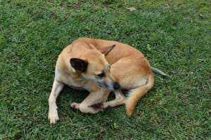 The Water Project: Sundulo B Community, Luvisia Spring -  Tamed Dog