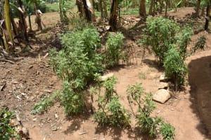 The Water Project: Ematetie Community, Amasetse Spring -  Bathing Shelter