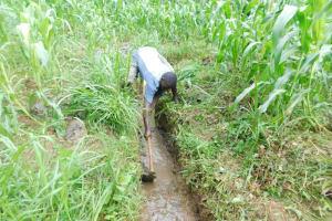 The Water Project: Musango Community, Wambani Spring -  Clearing The Drainage Channel