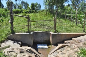 The Water Project: Mukhonje Community, Mausi Spring -  Water Flowing