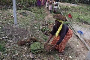 The Water Project: Malekha Central Community, Misiko Spring -  A Woman Delivers Grass To Plant At The Spring