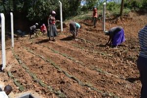 The Water Project: Makhwabuye Community, Majimazuri Lusala Spring -  Planting Grass