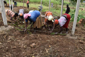 The Water Project: Indulusia Community, Wanyama Spring -  Planting Grass