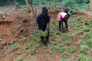 The Water Project: Shamakhokho Community, Wizula Spring -  Grass Planting