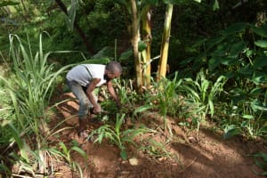 The Water Project: Malekha West Community, Soita Spring -  Site Clearance
