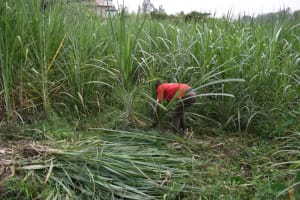 The Water Project: Bukhaywa Community, Violet Inganji Spring -  Initial Site Clearance