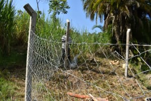 The Water Project: Bukhaywa Community, Violet Inganji Spring -  Fencing