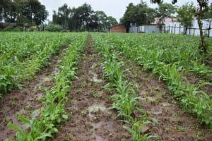 The Water Project: Shamberere Boys' High School -  School Farm