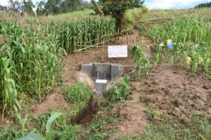 The Water Project: Ematetie Community, Amasetse Spring -  Amasetse Spring With Fence