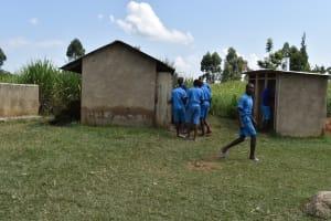 The Water Project: Ingavira Primary School -  Pupils Using Latrines