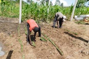 The Water Project: Shianda Community, Akhonya Spring -  Planting Grass