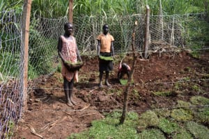 The Water Project: Lukala West Community, Luka Spring -  Grass Planting