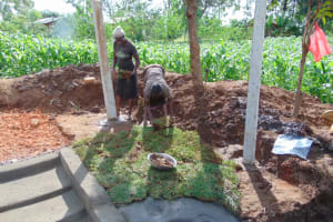 The Water Project: Lukala West Community, Angatia Spring -  Grass Planting