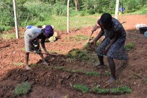 The Water Project: Bumira Community, Savai Spring -  Grass Planting