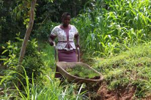 The Water Project: Shibikhwa Community, Musotsi Spring -  Miss Betty Ferrying Grass