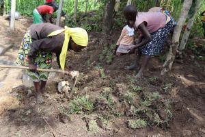 The Water Project: Shikokhwe Community, Mulika Spring -  Grass Planting