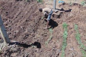 The Water Project: Mwera Community, Mukunga Spring -  Grass Planting