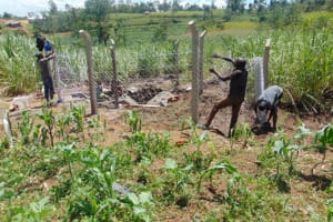 The Water Project: Mwera Community, Mukunga Spring -  Fencing
