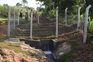 The Water Project: Sundulo B Community, Luvisia Spring -  View Of The Complete Spring