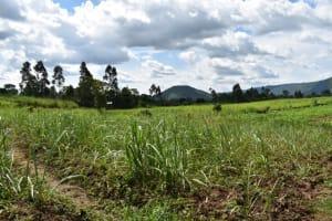 The Water Project: Friends Ikoli Primary School -  Community Landscape