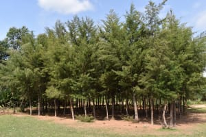 The Water Project: Mutoto Primary School -  Trees Inside School Compound