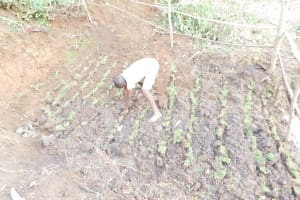 The Water Project: Mukhuyu Community, Namukuru Spring -  Planting Of Grass Above Catchment Area