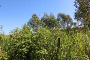 The Water Project: ACK St. Luke's Shanderema Primary School -  Landscape
