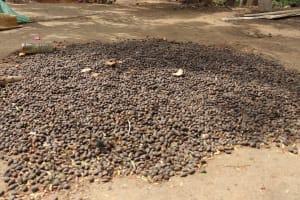 The Water Project: Kamasondo, Feradugu Village -  Palm Nuts