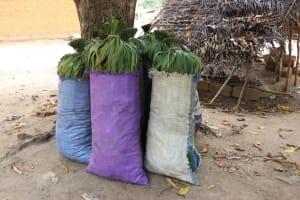 The Water Project: Kamasondo, Makontho Village -  Bags Of Charcoal