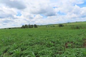 The Water Project: Rwenkole Community -  Landscape