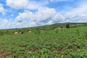 The Water Project: Rwenkole Community -  Rwenkole Landscape