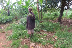 The Water Project: Kyakaitera Community -  Collecting From Garden
