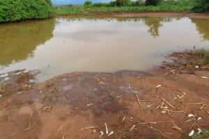 The Water Project: Kyakaitera Community -  Dam Water