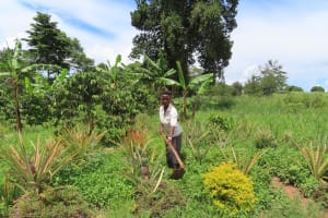 The Water Project: Kikingura Kidwaro Community -  Gardening
